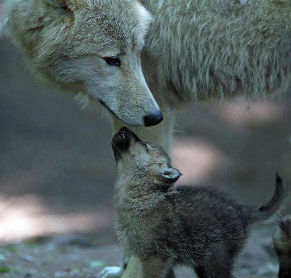 Blog Paroles maman tu es la plus belle du monde tino rossi